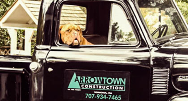 Here's Lucy, the Arrowtown Construction dog who is well known in every hardware store in Sonoma